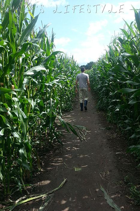 Brimstage maize maze 11