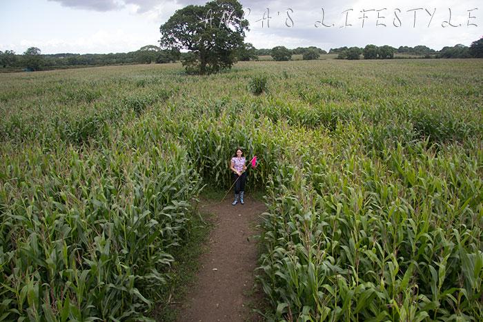 Brimstage maize maze 7