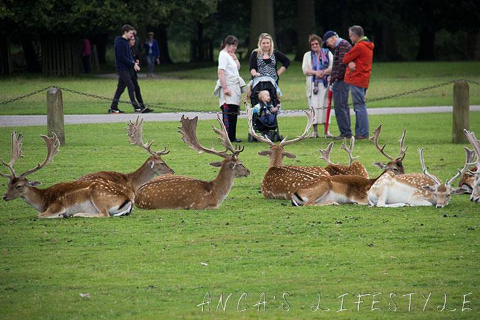 Dunham Massey deer park 2
