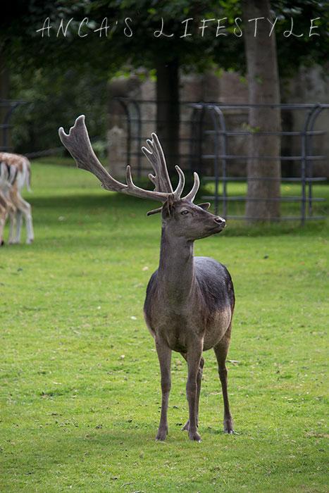 Dunham Massey deer park 4