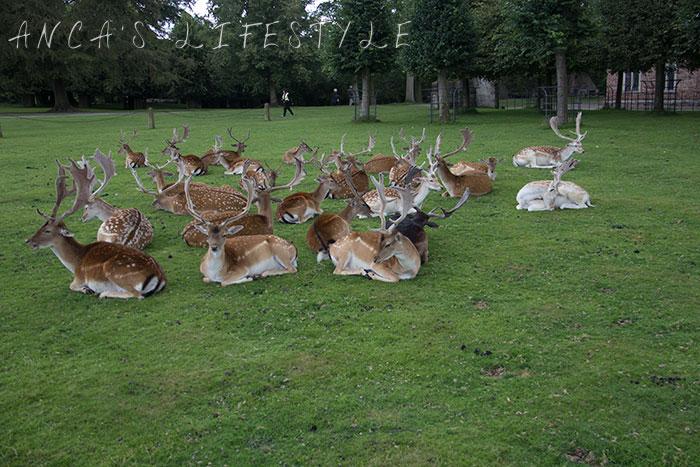 Dunham Massey deer park 5