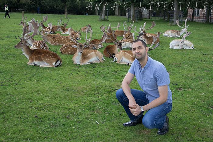 Dunham Massey deer park 6