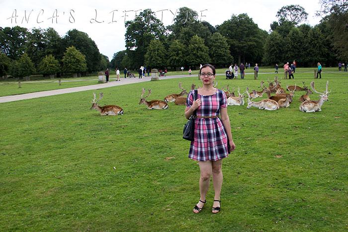 Dunham Massey deer park