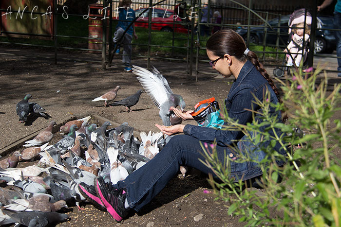 feeding pigeons 01