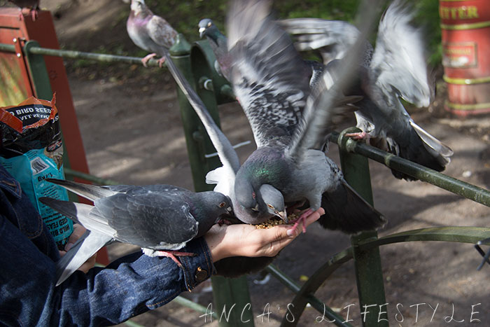 feeding pigeons 03