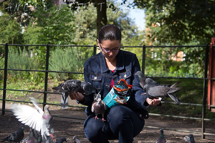 feeding pigeons 04