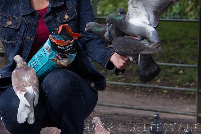 feeding pigeons 05