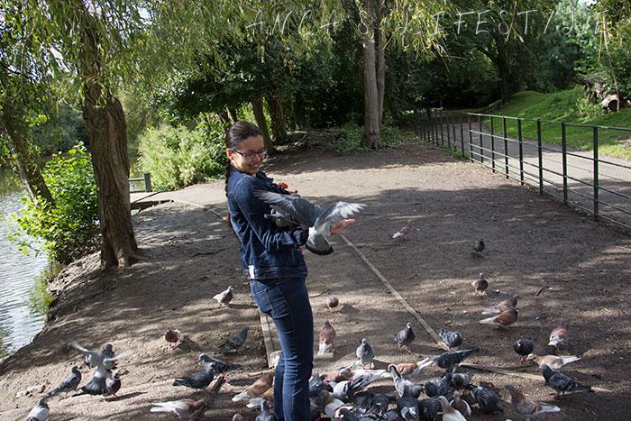 feeding pigeons 07