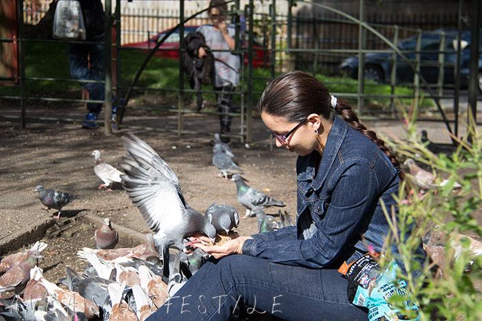 feeding pigeons 10