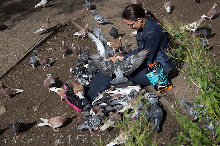 feeding pigeons 13
