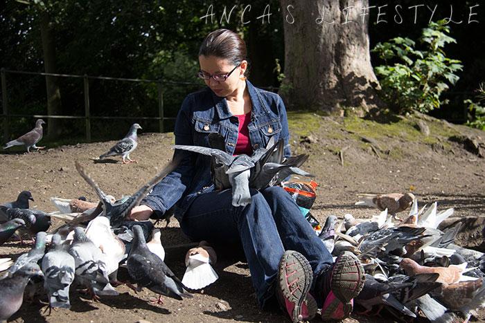 feeding pigeons 17