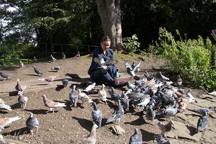 feeding pigeons 18