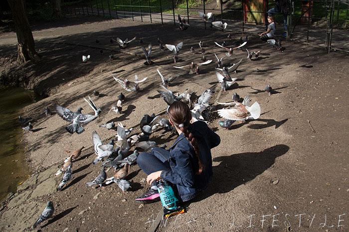 feeding pigeons 19