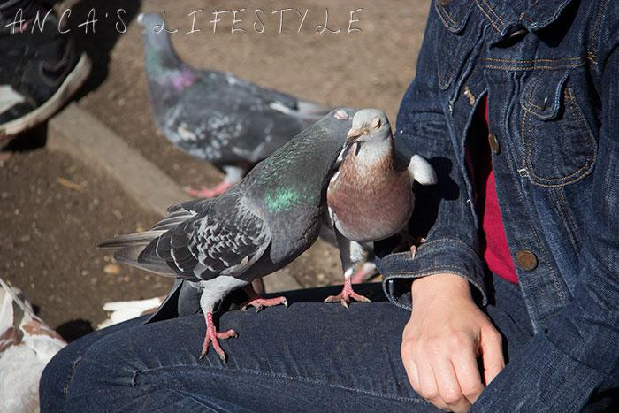 feeding pigeons 20