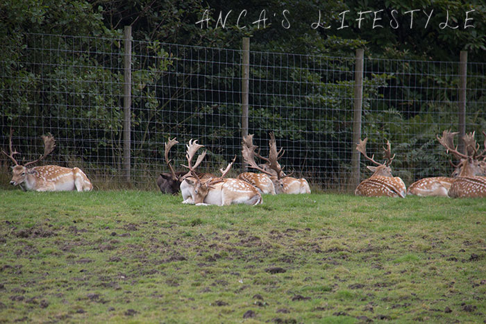 knowsley safari park blog 02