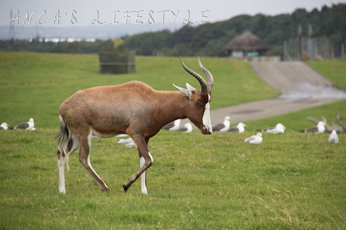 knowsley safari park review 02
