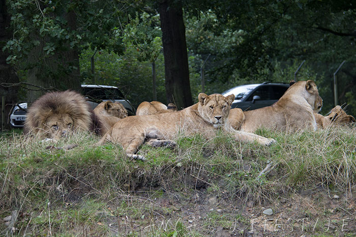 lions knowsley 5