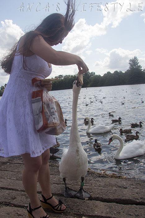 swans nantwich 7