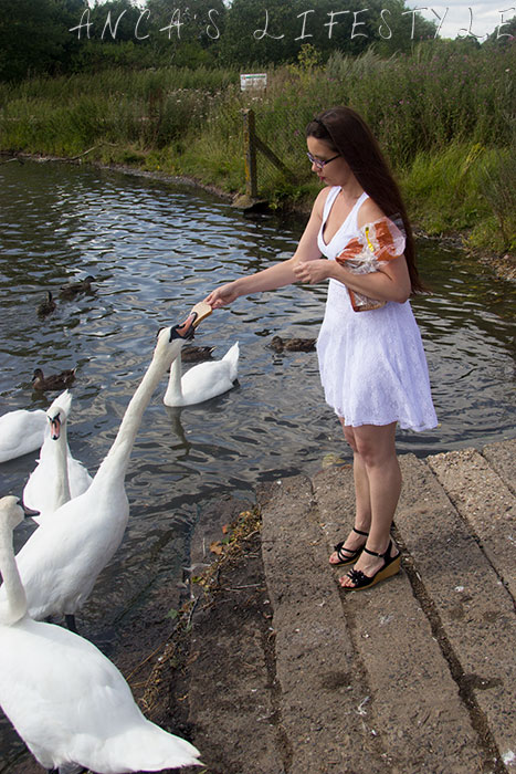 swans nantwich 8