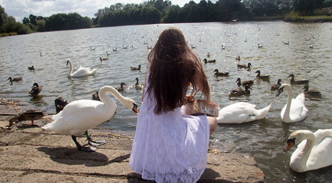 swans nantwich lake