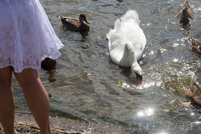 swans nantwich