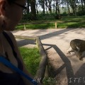 monkey forest 01