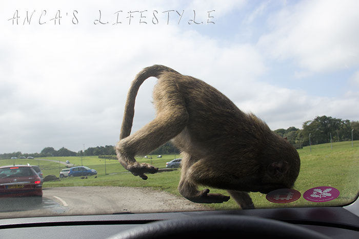 monkeys 14