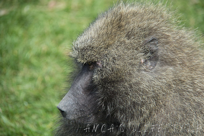 monkeys 9