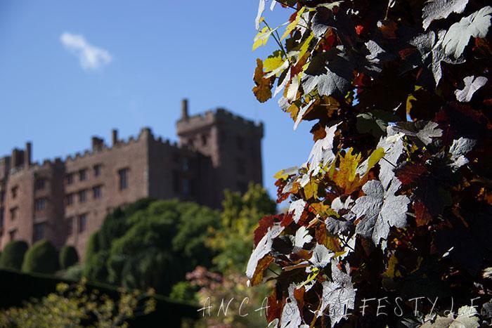 powis castle 23