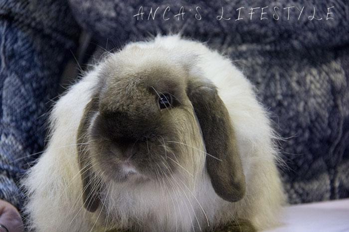 02 rabbit