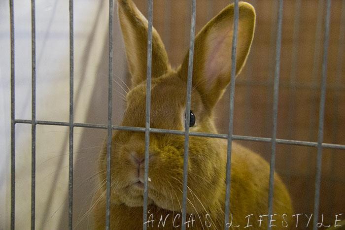 04 rabbits