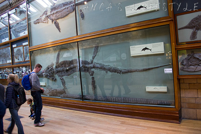 10 Natural History museum