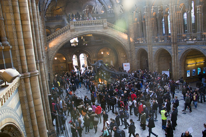 11 Natural History museum