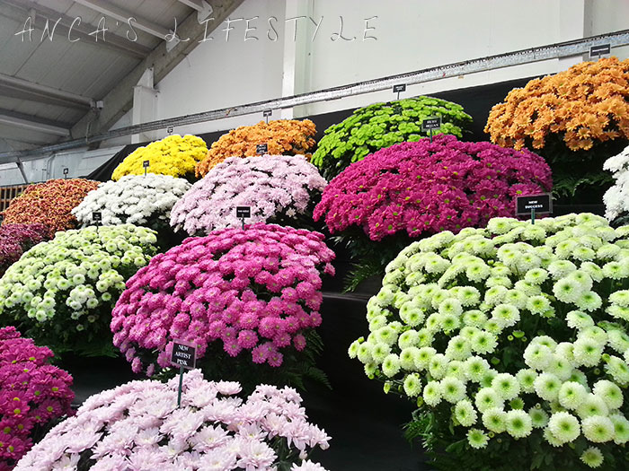 01 harrogate flower show 2015