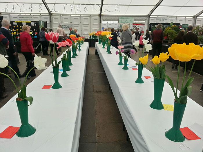 09 harrogate flower show 2015