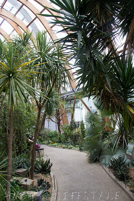 Sheffield Winter Gardens with plants and flowers and coffee shops