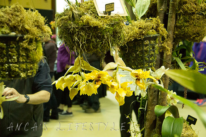 02 Tatton Park and Orchid Show