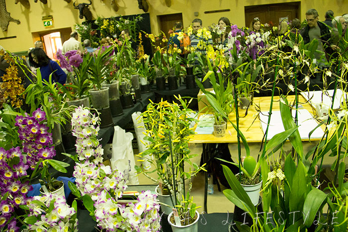 06 Tatton Park and Orchid Show