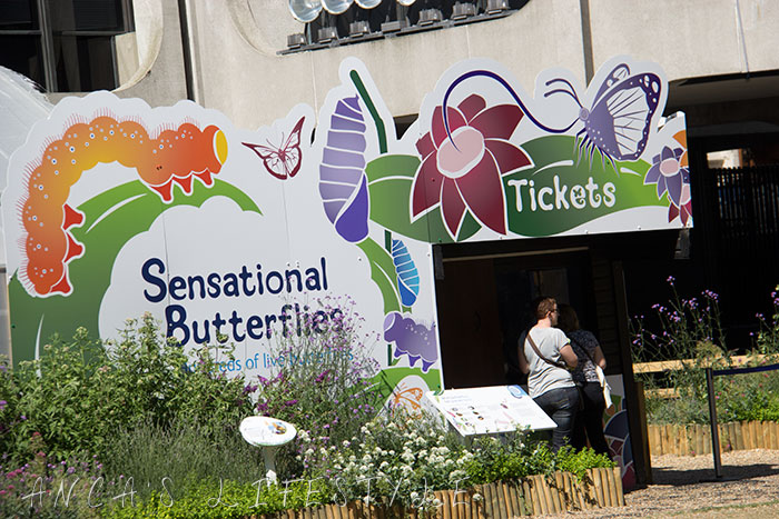 01  Sensational Butterflies London