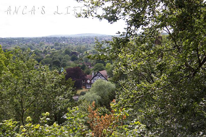 08 Cliveden woods