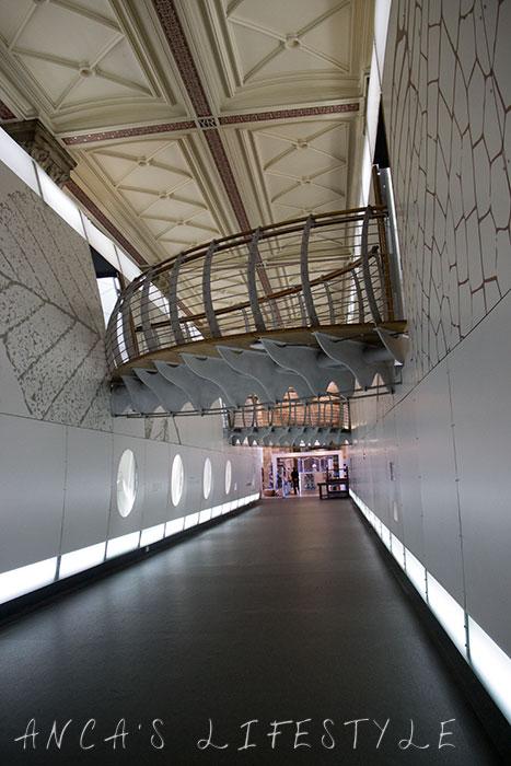 08 Natural History Museum London
