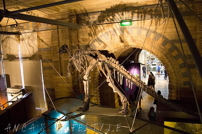 09 Natural History Museum London