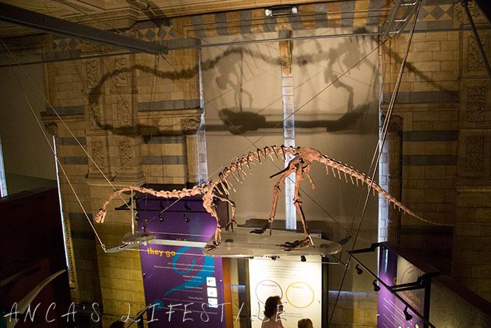 10 Natural History Museum London