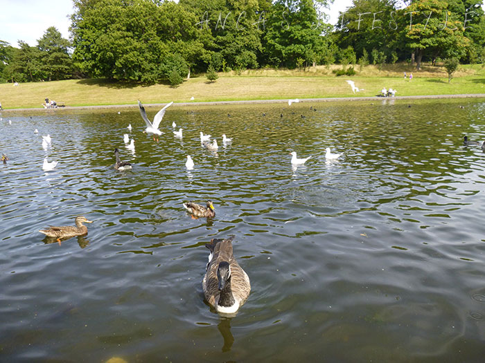 04 Feeding birds in Sefton Park