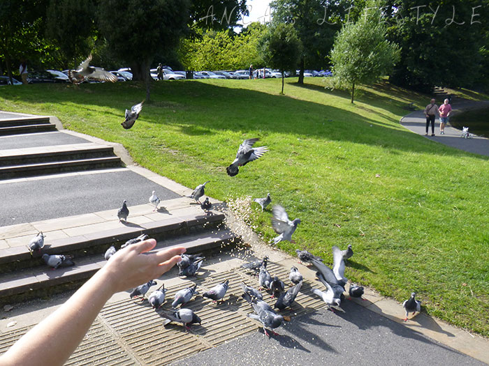 06 Feeding birds in Sefton Park