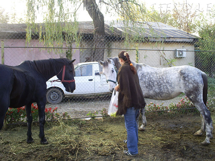2008-volunteering-horses