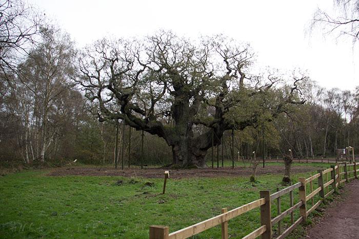 02 Sherwood forest