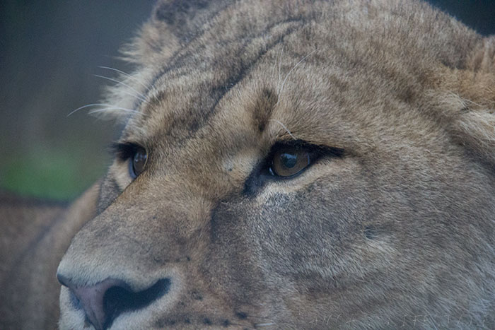 05 Knowsley Safari Park in December