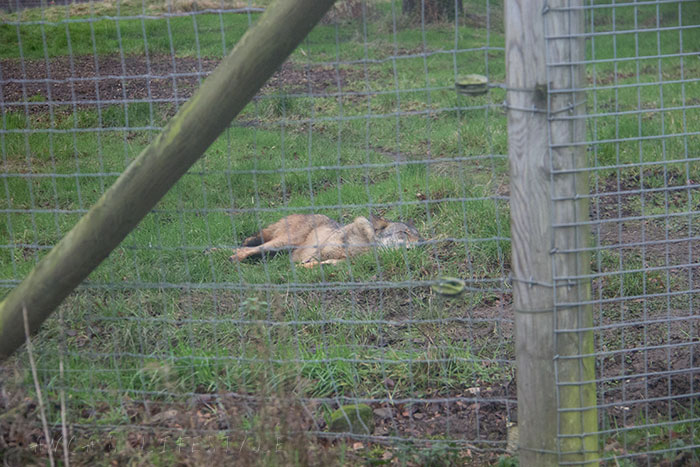 07 Knowsley Safari Park in December