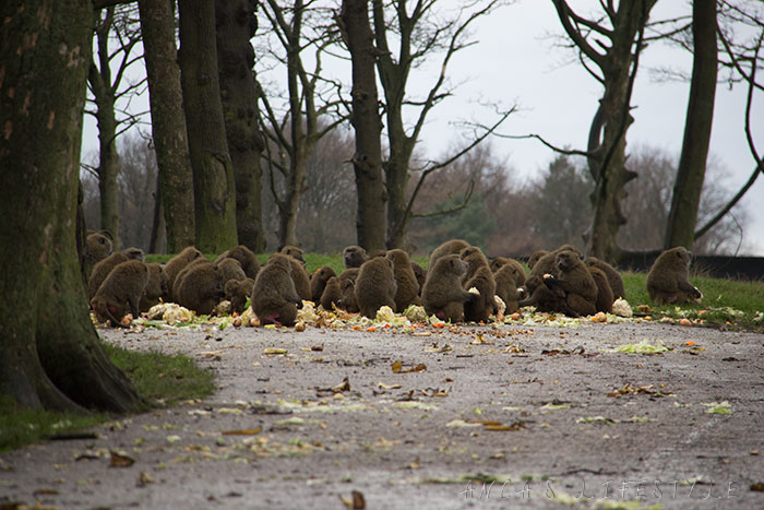 08 Knowsley Safari Park in December